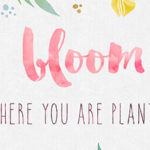 Free Desktop Wallpaper – Bloom Where you are Planted