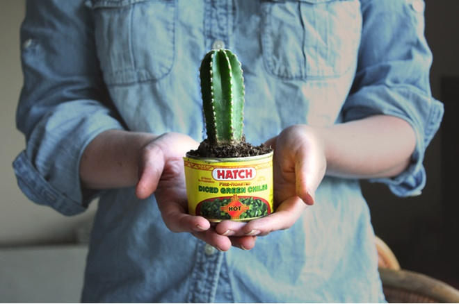 cacti party favours | camille styles