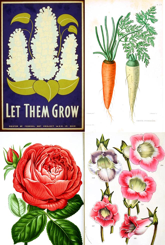 where to download free vintage images like this one - find the links here!